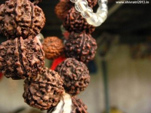Rudraksha-Wallpapers-Pictures-Images-Photos